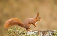 Stichting Eekhoornopvang Nederland een speciaal eekhoornweekend op 17 en 18 mei