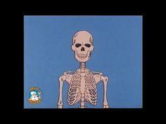Era Uma Vez... O Corpo Humano - O Esqueleto (extrato)