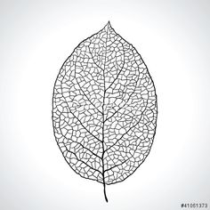 Vecteur : Black macro leaf natural isolated. Vector illustration.