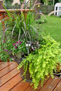A blog about learning to grow a garden in zone 5b
