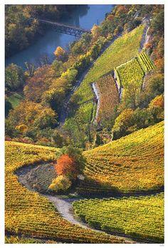 Autumn delight, Valaisan Vineyard, Leuk, Switzerland