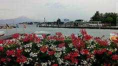 2014, week 37. Flowers on Garda Lake, Peschiera del Garda - Italy. Picture taken: 2014, 07