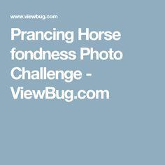 Prancing Horse fondness Photo Challenge - ViewBug.com