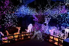 Winter Wild Lights at the Columbus Zoo