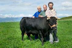 Jean-Jacques Blanchard, Thierry Jaquier et Christian Gonin (de g. à d.) font partie de l'Amicale de la vache d'Hérens du Nord vaudois. © Michel Duperrex
