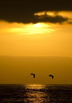 Paz en Viña del Mar - Chile