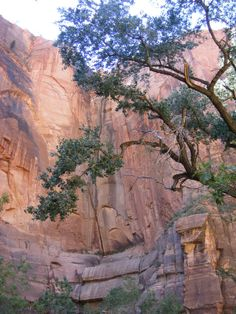 Exploring Zion National Park in Utah. Photo by TurnipseedTravel.com