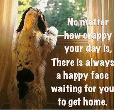 Most kennels are closed on the weekends leaving you waiting to see your beloved pet when you get home. Pet sitting assures your pet is at home waiting to greet you.