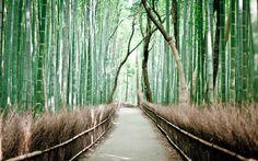 Δάσος Μπαμπού Sagano, Ιαπωνία. Bρίσκεται στην περιοχή Arashiyama, στα δυτικά προάστια του Κιότο. Και θεωρείται απίστευτο εξαιτίας του ήχου που κάνει ο άνεμος που φυσά ανάμεσα από τα λεπτά μπαμπού, ο οποίος έχει ψηφιστεί ως ένας από τους εκατό ήχους που πρέπει να διατηρηθούν στην χώρα.