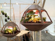 Garden Trends 2013: Hanging pendant lamp doubles as terrarium for indoor gardening Vicky Lamp designed by José de la O / inhabitat