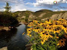 Sunflower & Beautiful Nature - Vail (Colorado)