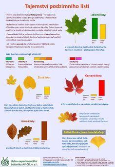 Tajemství podzimního listí - infografika o změnách barvy listů na podzim Autumn Activities For Kids, Science For Kids, Preschool Activities, Crafts For Kids, Montessori, School Clubs, Autumn Crafts, Elementary Science, School Humor