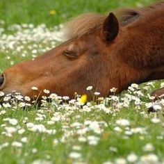 napping in the wild flowers