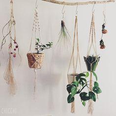 部屋の植物14・15・16・17  左からアイビー・T.ジュンセア・ヒメモンステラ・リプサリス  ハンギングバーを夏らしく模様替えしました。  #green #plants #plantlife #plantlove #indoorgarden #indoorplants #hanging #planthanger #ivy #juncea #monstera #rhipsalis #handmade #植物 #植物のある暮らし #インテリアグリーン #ハンギング #プラントハンガー #アイビー #ジュンセア #ヒメモンステラ #リプサリス #ハンドメイド