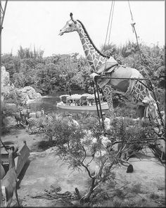 Jungle Cruise construction, Disneyland .. opening day was on July 17, 1955