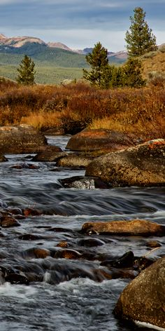 The Taylor river flowing through Gunnison National Forest in Colorado