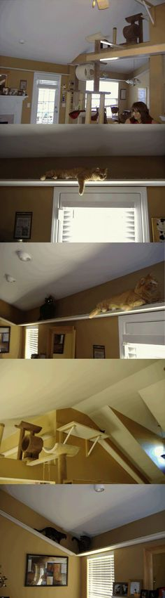 Crazy cat guy, modified his home for his 7 cats. #cats #CatShelves