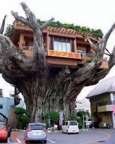 Incredible tree restaurant  Naha is the capital of Okinawa Prefecture, the tropical island group south of mainland Japan