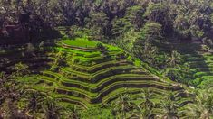 Drone Photography, Landscape Photography, Aerial Drone, Melbourne Wedding, Ubud, Portrait Photographers, Bali, Rice Terraces, Sunsets