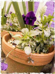 Purple planter and purple pansy