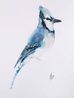 Jay Bird, Blue Bird, Blue Jay, Watercolor Bird, Watercolor Paintings, Bird Artwork, Bird Pictures, Reference Images, Paintings For Sale