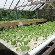 Salah satu instalasi hidroponik Indmira ni sobat. Menggunakan sistem apung dengan bantuan styrofoam untuk menopang tanaman. . . . #hydroponics #aquaponics #hidroponik #urbanfarming #verticalfarming #plants #organicproducts #planting by indmira