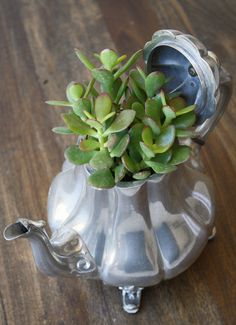 article budget busting flower ideas