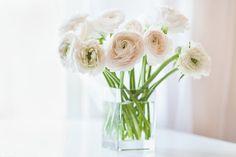 Alarga-La-Vida-De-Tus-Flores