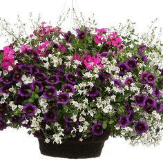 Advice on everything gardening Large Flower Pots, Flower Planters, Flower Boxes, Container Flowers, Container Plants, Container Gardening, Lawn And Garden, Garden Pots, Garden Ideas