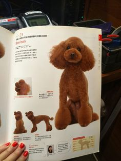 Taken from a Japanese dog grooming guide magazine. This is just a reference for me to go back to. Images does not belong to me.