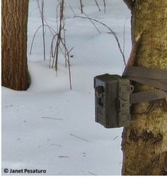 Here, I jammed a stick between the camera and the tree, to make the camera point exactly as I wanted it. setting up a camera trap for wildlife Expecting Photos, Pocket Camera, Trail Camera, Remote Camera, Environmental Education, Bow Hunting, Go Outside, Mother Nature, Habitats