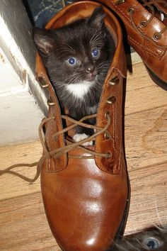 Cats in shoes!  Get this Princess a Sasquatch! Pet Bed!!