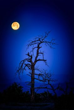 moon and the bluest night. Sun Moon, Stars And Moon, Cool Photos, Beautiful Pictures, Shoot The Moon, Moon Shadow, Moon Pictures, Beautiful Moon, Image Hd