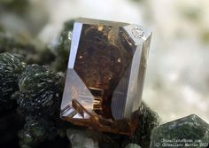 Anatase Griesferner glacier, Vizze Valley (Pfitsch Valley), Bolzano Province (South Tyrol), Trentino-Alto Adige, Italy 1.85 mm brown-yellow Anatase crystal. Collection & Photo Matteo Chinellato