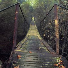 an autumn bridge. Wow, I want to make a movie about this bridge. Autumn Tumblr, Beautiful World, Beautiful Places, All Nature, Jolie Photo, Covered Bridges, Pics Art, Pathways, Places To Go