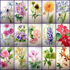 Learn How to Paint Flowers | The Watercolor Flower Painter's A to Z by Adelene Fletcher ...