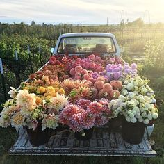"""This lil truck takes me back to my days living in the country. 🌺🌸🌼🌻🌺🌷🌸🌼 photo by @floretflower """"cowboy take me away"""" 🐄🐕🌳🐓🌵☀️🚜🏡🎶🎵"""