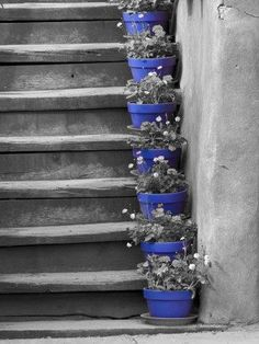 My front steps have cobalt blue pots too. Its a great color.