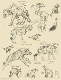 Learning to draw Freya's hyena form Animal Sketches, Animal Drawings, Drawing Sketches, Art Drawings, Art Reference Poses, Drawing Reference, Creature Drawings, Anatomy Drawing, Wild Dogs