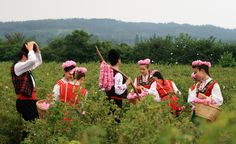 Head to Bulgaria for the remarkably beautiful Rose Festival.