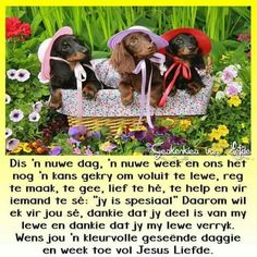 Nuwe dag nuwe week Good Morning Wishes, Day Wishes, Daily Thoughts, Positive Thoughts, Bible Emergency Numbers, Evening Greetings, Goeie Nag, Goeie More, Afrikaans Quotes