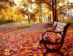 autumn in the park - Fall Wallpaper 9 Free Fall Wallpaper, Autumn Leaves Wallpaper, Tree Wallpaper, Scenery Wallpaper, Wallpaper Wallpapers, Autumn Park, Beautiful Nature Wallpaper, Autumn Trees, Fall Leaves