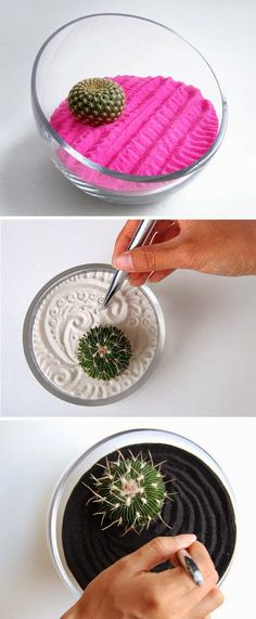 Awesome Nature: DIY Zen Gardens