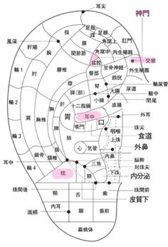 Qigong, Ear Reflexology, Back Fat Workout, Human Body Anatomy, Body Picture, Acupuncture Points, Holistic Medicine, Medical Science, Homemade Skin Care