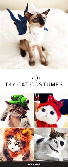 Now that the of July is over, it's time for Halloween, right?) Here are some spooktacular Halloween costumes for your pet cat to try on. Kitten Halloween Costumes, Chat Halloween, Pet Costumes, Costume Chat, Diy Cat Costume, Costume Ideas, Cookie Costume, Cat Crafts, Cat Supplies