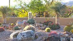 Cactus planting color texture boulders desert landscape www.tvcdesignbuild.com