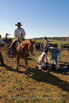 ranches and cowboys | Branding-ranching-horses-Montana-AR630513_185.jpg