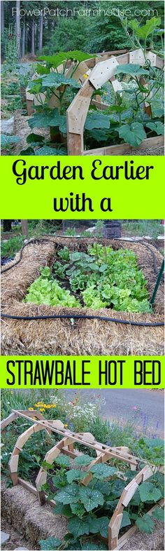 Get your garden started earlier with a Straw bale garden hot bed.  Easy to do and can also help you garden through winter. FlowerPatchFarmhouse.com