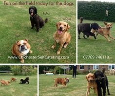 """Happy dogs make for happy humans! If your dog is """"one of the family"""" - why not stay at Chichester Self Catering for a memorable experience? Pet and child friendly. Great walks and beaches locally. Bracklesham Bay, West Wittering, Great Walks, Chichester, Big Garden, Child Friendly, Love Pet, Happy Dogs, Dog Walking"""