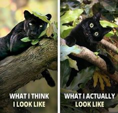 Want more cute kittens? Want more cute kittens? Funny Animal Jokes, Funny Cat Memes, Funny Animal Pictures, Cute Funny Animals, Animal Memes, Cute Baby Animals, Funny Cats, Hilarious, Cute Kittens